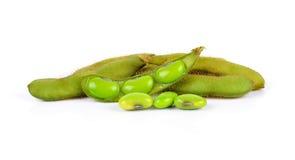 Pianta raccolta fresca della soia (edamame) isolata su backgr bianco Immagini Stock