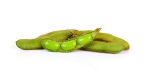 Pianta raccolta fresca della soia (edamame) isolata su backgr bianco Immagine Stock Libera da Diritti
