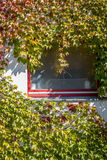 Pianta rampicante su una finestra immagine stock