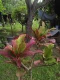 Pianta rosa e verde Immagini Stock