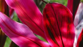 Pianta rosa in ombra Fotografia Stock Libera da Diritti