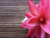 Pianta rosa sullo scrittorio Fotografie Stock