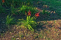 Pianta rossa dei fiori con una tonalità verde immagine stock libera da diritti