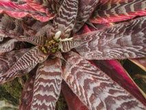 Pianta rossa della foglia del fiore della flora in foresta con la pietra Immagine Stock Libera da Diritti