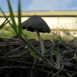 Pianta selvatica del fungo in Indonesia presa con la macro morbidezza sparata dello spazio della copia fotografie stock