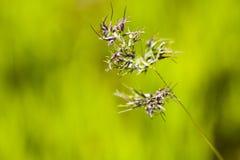 Pianta selvatica verde isolata su verde Fotografie Stock Libere da Diritti