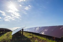Pianta solare Fotografia Stock Libera da Diritti