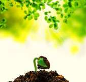 pianta sopportata nuova vita Fotografia Stock Libera da Diritti