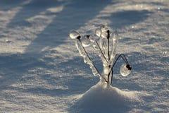 Pianta sotto ghiaccio Immagine Stock Libera da Diritti