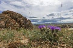 Pianta spinosa di fioritura su un fondo delle montagne Fotografia Stock