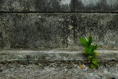 Pianta su cemento Fotografia Stock