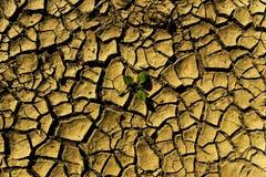 Pianta su soill asciutto con le fessure Immagini Stock Libere da Diritti