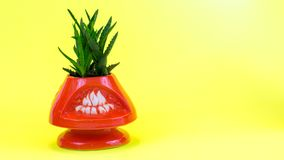Pianta succulente dell'aloe in vaso arancio Immagini Stock Libere da Diritti