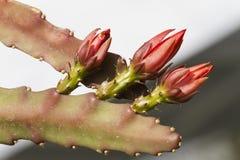 Pianta succulente nel giardino Fotografie Stock Libere da Diritti