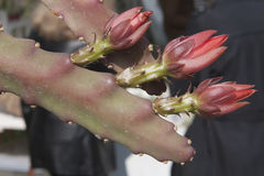 Pianta succulente nel giardino Immagine Stock