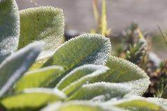 Pianta succulente nel giardino Fotografia Stock