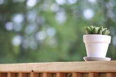 Pianta succulente sul portico fotografia stock libera da diritti