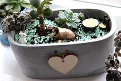 Pianta-succulenti dell'interno in vaso Immagine Stock