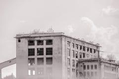 Pianta sul tetto di costruzione abbandonata fotografia stock libera da diritti