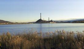 Pianta sulla riva del lago Fotografia Stock