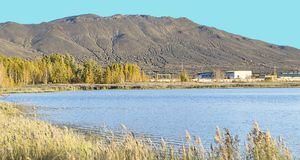 Pianta sulla riva del lago Fotografie Stock Libere da Diritti