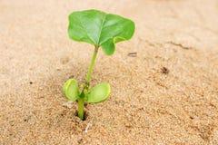 Pianta sulla sabbia della spiaggia fotografie stock libere da diritti