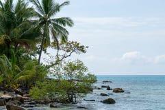 Pianta sulla spiaggia Immagine Stock Libera da Diritti