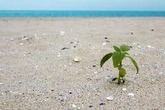 Pianta sulla spiaggia Fotografia Stock
