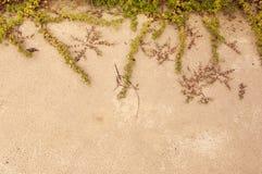 Pianta sulla spiaggia di sabbia Fotografia Stock