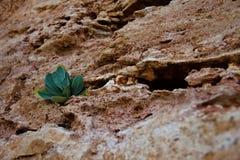 Pianta sulle rocce Fotografia Stock Libera da Diritti