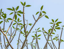 Pianta tropicale Immagine Stock Libera da Diritti