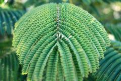 Pianta tropicale Immagini Stock