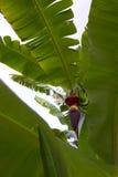 pianta tropicale Immagine Stock