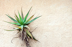 Pianta tropicale contro il muro di cemento Immagini Stock Libere da Diritti