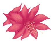 Pianta tropicale disegnata a mano fotografie stock libere da diritti