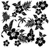 Pianta tropicale e fiore Fotografia Stock Libera da Diritti