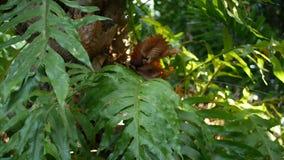 Pianta tropicale esotica succosa luminosa in giungla Fondo organico naturale del fuoco selettivo, fogliame insolito della pianta  video d archivio