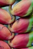 Pianta tropicale - Heliconia fotografia stock