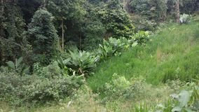 Pianta tropicale misteriosa Fotografie Stock Libere da Diritti