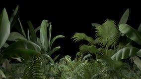 Pianta tropicale su un alfa canale stock footage