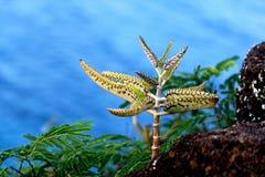 Pianta tropicale sulla scogliera Fotografia Stock