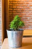 Pianta in un vaso sulla tavola di legno Immagine Stock Libera da Diritti