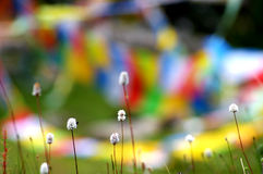Pianta variopinta e bandiere di preghiera nel Tibet Fotografie Stock Libere da Diritti