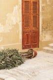 Pianta in vaso caduta in vicolo di Birgu Malta Fotografie Stock Libere da Diritti