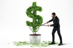 Pianta in vaso con forma del dollaro rappresentazione 3d Fotografia Stock