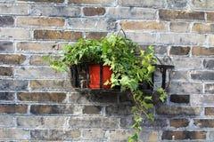 Pianta in vaso di giardinaggio del contenitore Fotografia Stock Libera da Diritti