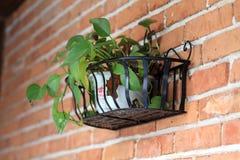 Pianta in vaso di giardinaggio del contenitore Immagine Stock Libera da Diritti