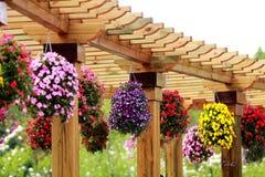 Pianta in vaso di giardinaggio del contenitore Immagini Stock