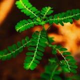 Pianta verde fotografia stock libera da diritti