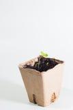Pianta verde Fotografia Stock